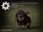 Lovable Pets Photography Competition