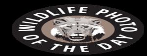 2017 Wildlife Photo Contest