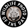 2017 Wildlife Photo Contest—win a photo safari worth up to $10,000!
