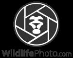 2018 Animal Behaviour Photo Contest