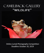 """Wildlife Photography"" Online Juried Competition"