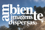 Photographic Competition Ambiente Imagens Dispersas 2019 – Ovar – Portugal