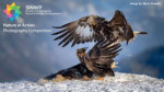 Nature in Action Photography Competition
