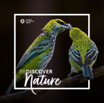 REDISCOVER Nature Photography Competition 2020