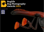 The Bug Photography Awards 2021