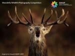 Wonderful Wildlife Photography Competition
