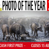 Better Photography Photo of the Year 2017