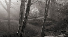 International Garden Photographer of the Year Monochrome Winner