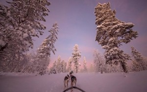 Husky Ride -  Photo and caption by William Chua/National Geographic Traveler Photo Contest -  Huskies pulling my sledge through the forest