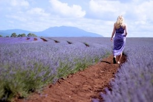 Lavender Fields Forever -  Photo and caption by Jennifer Holmes Beamer/National Geographic Traveler Photo Contest -  While traveling through Tasmania, we took a detour to find this spectacular lavender field. After a soothing meander among endless fields of fragrant lavender we were ready for a nap in the red soil.