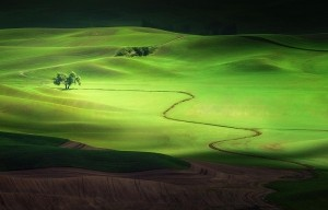 Shadows and Light -  Photo and caption by Jesse Summers/National Geographic Traveler Photo Contest -  A lone tree in the Palouse region of Washington glows brilliantly in the sunlight as clouds pass by, isolating it in a band of light.  Undulating hills provide depth to the lit scene, captured during the brief growing season where the wheat is a rich shade of green.