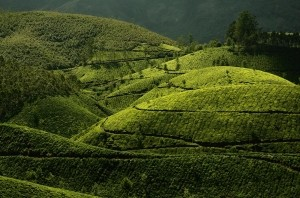 Curves of Nature by Photographer: Gaurav Chingale