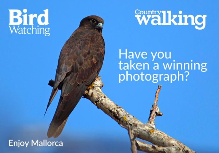 Bird Watching 2016 Calendar