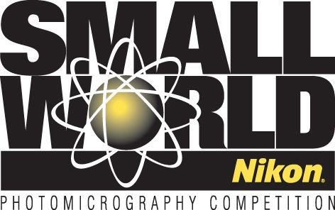 2016 Nikon Small World Competition