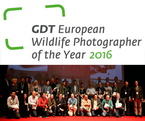 GDT Wildlife European Photographer of the Year
