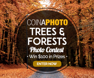 Trees and Forests – Win $100