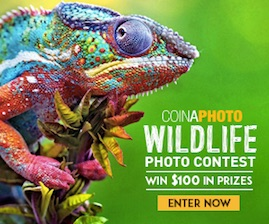 Wildlife Photo Contest