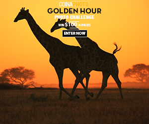 Golden Hour Contest