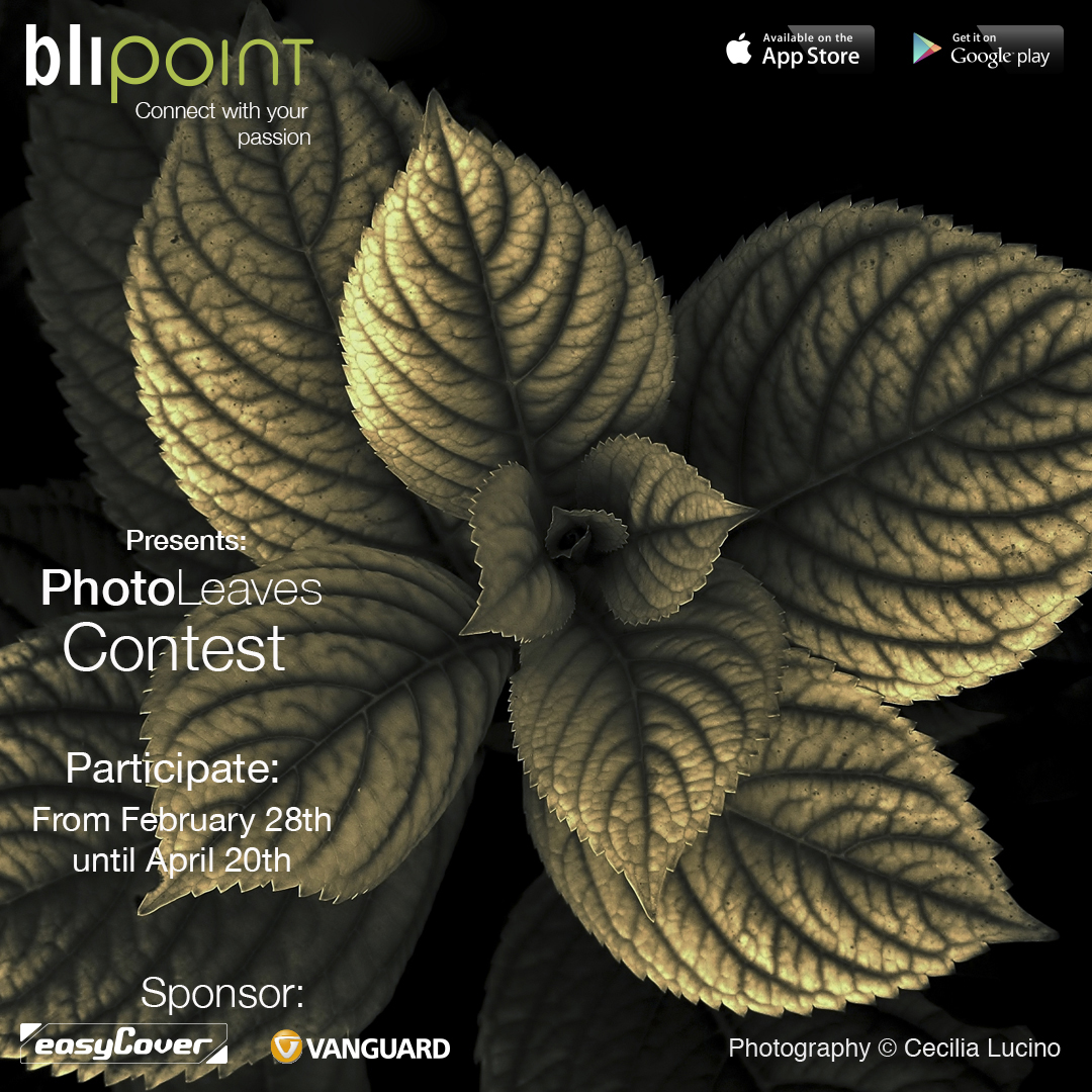 Photo Contest PhotoLeaves