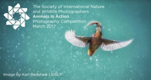 Animals in Action Photography Competition