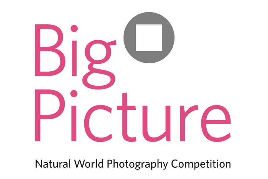BigPicture Natural World Photography Competition