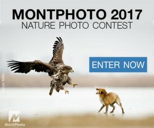 MontPhoto 2017