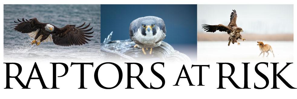 Raptors at Risk