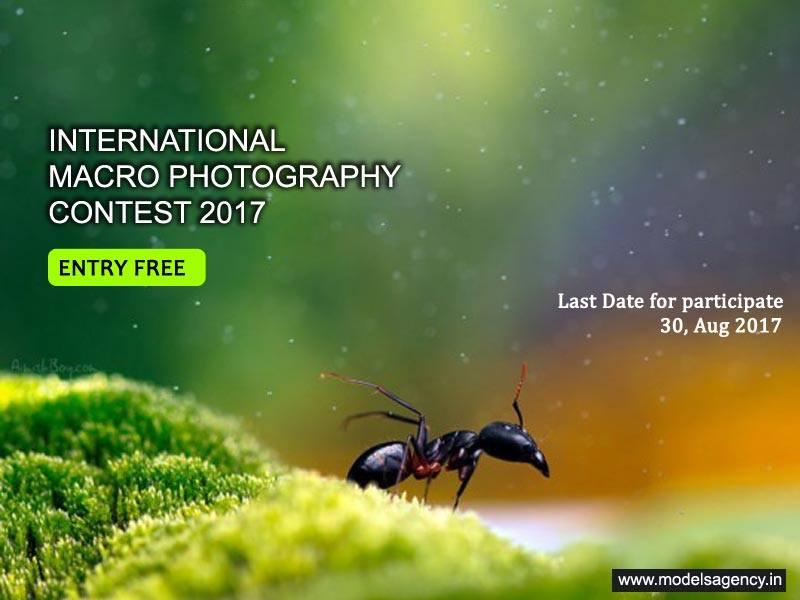 International Macro Photography Contest 2017