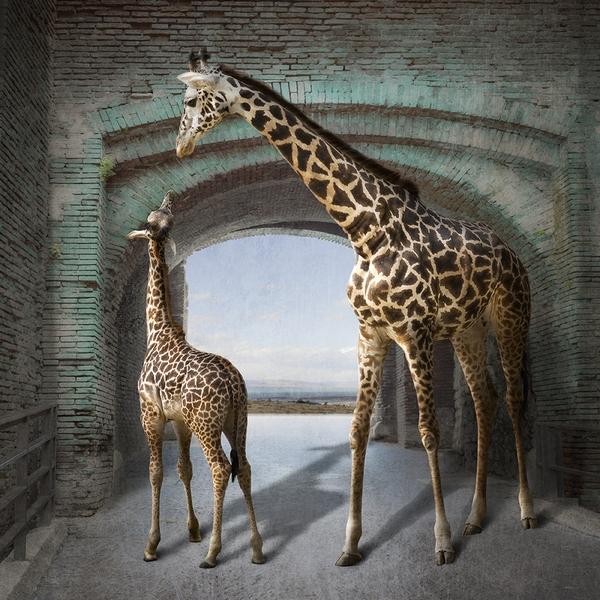 L.A. Photo Curator 'The Animal Kingdom' with curator Carol Erb