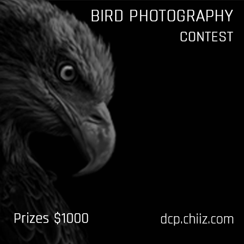 Birding Photography Contest