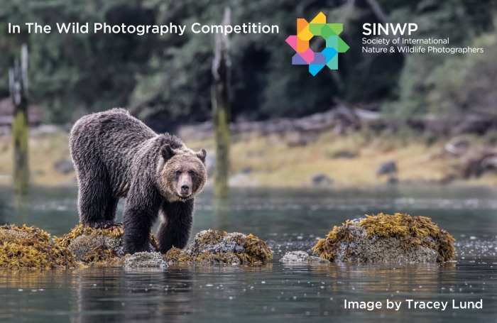In The Wild Photography Competition