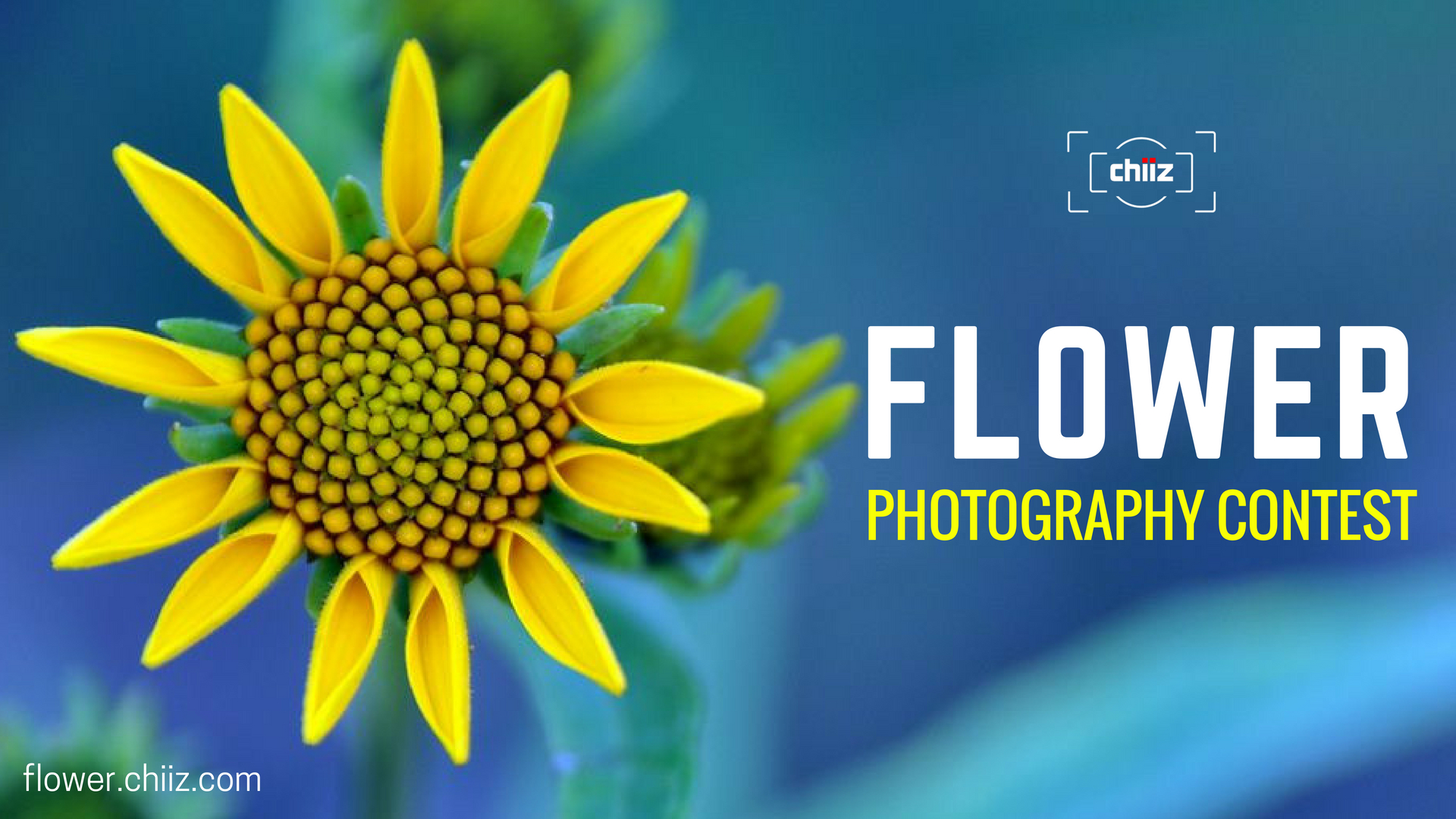Chiiz Flower Photography Contest