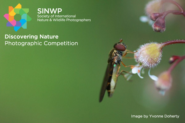 Discovering Nature Photography Competition