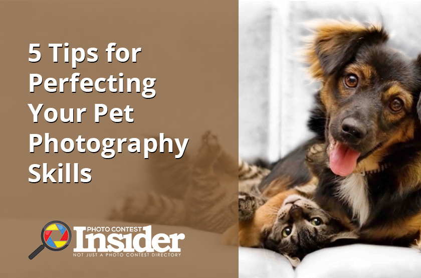 5 Tips for Perfecting Your Pet Photography Skills