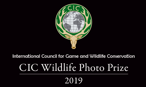 CIC Wildlife Photo Prize 2019 – ready, steady, shoot!