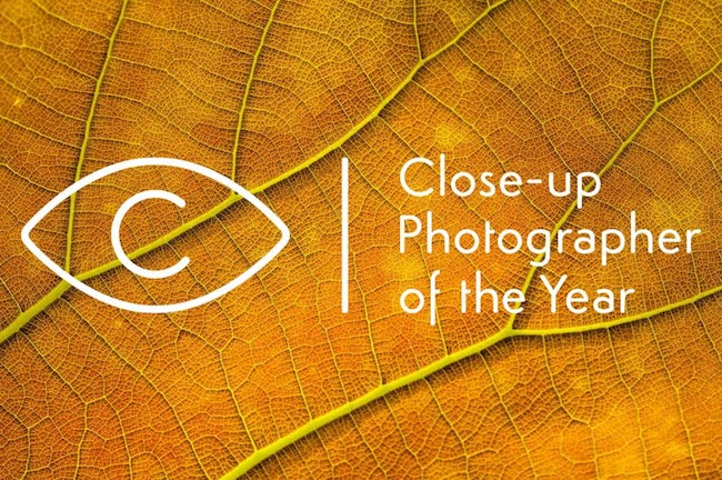Close-up Photographer of the Year