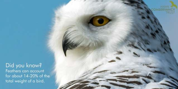 Hawk Conservancy Trust Competition 2019