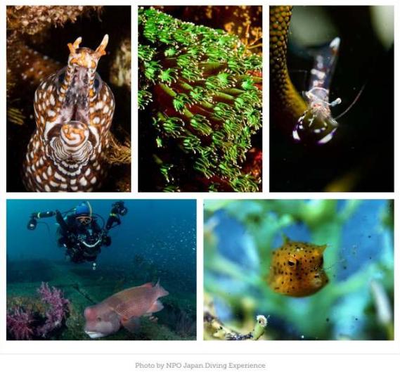 Japan Underwater Photo Contest 2019