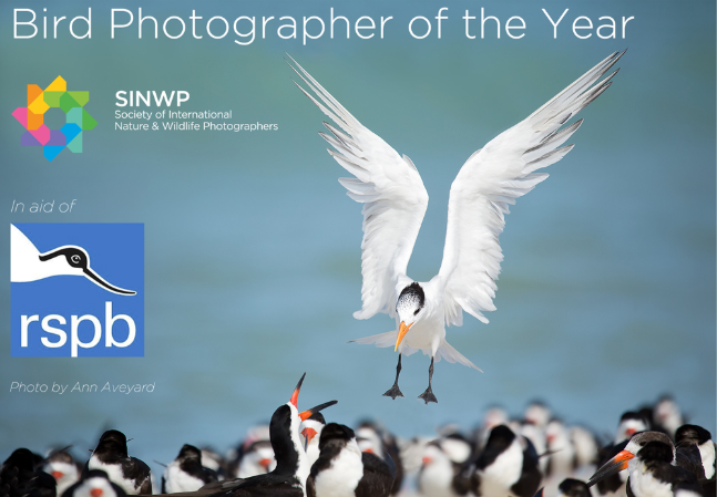 SINWP Bird Photographer of the Year 2019 in aid of RSPB