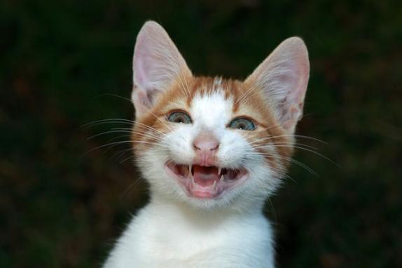 2020 Mars Petcare Comedy Pet Photographer Award