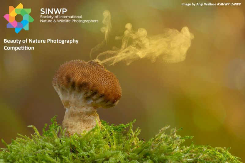 Beauty of Nature Photography Competition