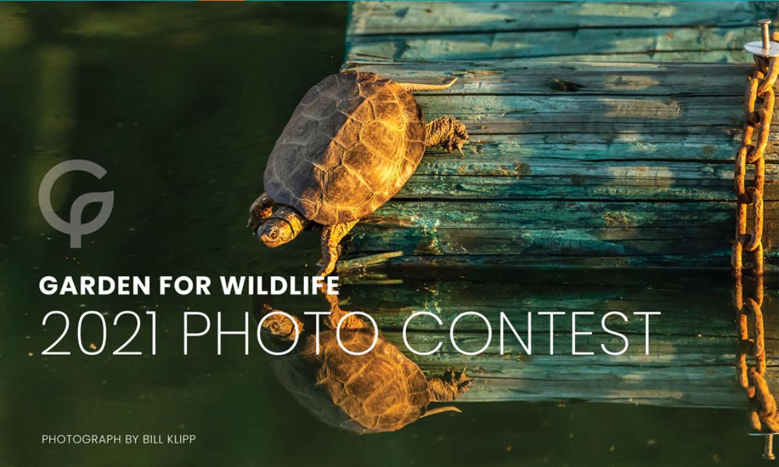 2021 Garden for Wildlife Photo Contest