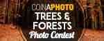 Trees & Forests - Win $100